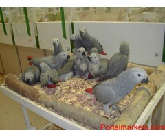 All SPECIES OF PARROTS BIRDS AND FERTILE  EGGS FOR SALE