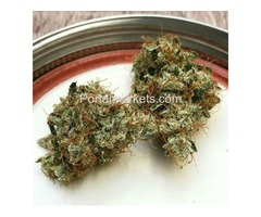 fresh Green Purple Kush Rapid Highs White Widow Sour Diesel and many others...