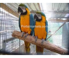 Talking and well trained parrots for adoption