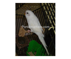 Complete tame parrots, cockatoos, amazons with different species and fertile eggs for sale